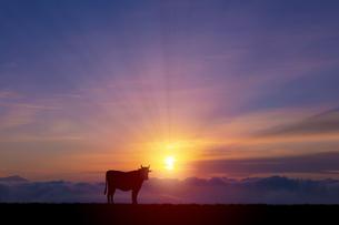 牛と朝日の写真素材 [FYI04570852]
