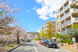 関西の風景 芦屋市の街並みの写真素材 [FYI04571190]