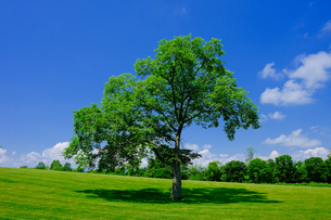 青空と大木の写真素材 [FYI04571461]