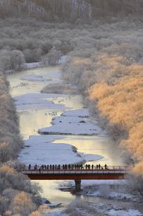 タンチョウのねぐらとカメラマン(北海道・鶴居村)の写真素材 [FYI04571465]