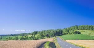 北海道 自然 田園風景 美瑛の写真素材 [FYI04571935]