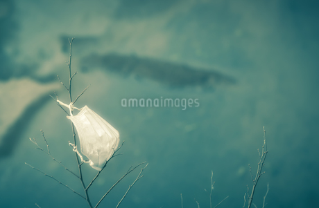 木の枝に結ばれたマスクの写真素材 [FYI04572021]