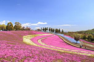 八王子山公園 芝桜の写真素材 [FYI04572247]