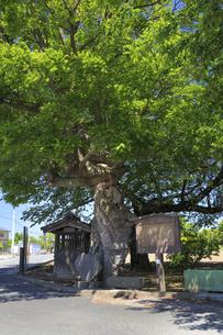 石戸宿 芭蕉句碑の写真素材 [FYI04572309]