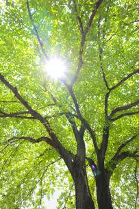 初夏の新緑の写真素材 [FYI04572336]