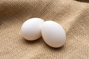 卵の写真素材 [FYI04573081]