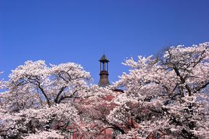 4月 サクラの清春芸術村の写真素材 [FYI04573259]