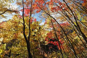秋の西沢渓谷 遊歩道の紅葉の写真素材 [FYI04574328]