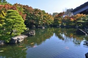 青空の好古園,御屋敷の庭の写真素材 [FYI04575069]