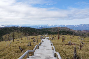 大台ヶ原の笹が広がる高原に続く木道の写真素材 [FYI04576072]