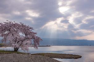 諏訪湖の畔に咲く桜と薄明光線の写真素材 [FYI04576100]