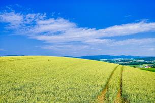 麦畑と青空の写真素材 [FYI04576159]