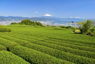 静岡県 日本平の茶畑より望む富士山の写真素材 [FYI04576164]