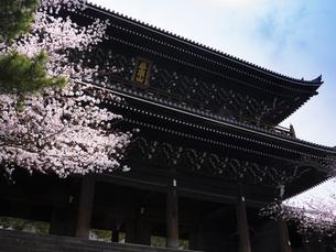 京都 知恩院 桜と三門の写真素材 [FYI04576445]