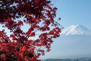 河口湖畔の紅葉と富士山の写真素材 [FYI04576698]