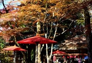 有馬,もみじの紅葉瑞宝寺公園の写真素材 [FYI04576704]