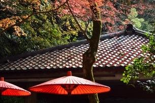 有馬,紅葉の瑞宝寺公園の写真素材 [FYI04576707]