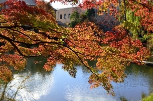 西宮,関学校内,もみじの紅葉新月池の写真素材 [FYI04576718]