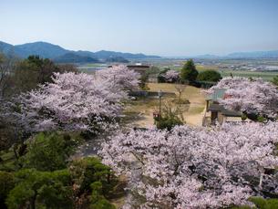 岡山県笠岡市 桜の古城山公園の写真素材 [FYI04577006]