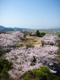 岡山県笠岡市 桜の古城山公園の写真素材 [FYI04577008]