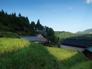 滋賀県高島市 畑の棚田の写真素材 [FYI04577019]