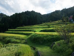 滋賀県高島市 畑の棚田の写真素材 [FYI04577022]