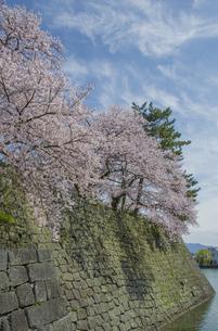 福井城跡の堀とソメイヨシノの写真素材 [FYI04577479]