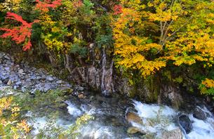 照葉峡の紅葉の写真素材 [FYI04577743]