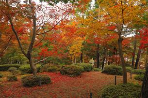 11月 紅葉の松雲山荘 -新潟県の日本庭園-の写真素材 [FYI04577878]