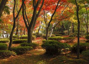 11月 紅葉の松雲山荘 -新潟県の日本庭園-の写真素材 [FYI04577879]