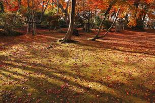 11月 長岡のもみじ園の写真素材 [FYI04578149]
