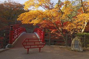 11月 弥彦公園もみじ谷  -新潟の紅葉名所-の写真素材 [FYI04578741]