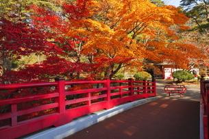 11月 弥彦公園もみじ谷  -新潟の紅葉名所-の写真素材 [FYI04578746]