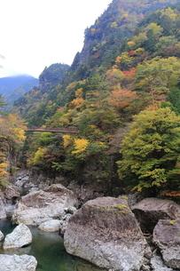 天川村ミタライ渓谷の紅葉の写真素材 [FYI04579614]