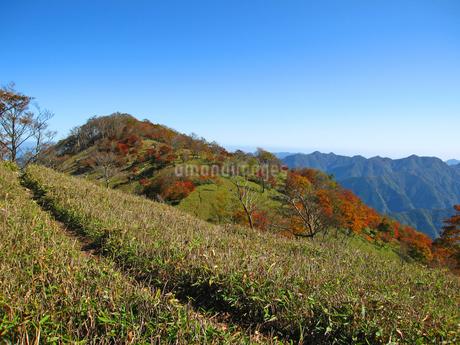奈良県と三重県の県境 桧塚奥峰の紅葉の写真素材 [FYI04579616]