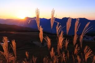 奈良県曽爾高原の夕日に輝くススキの写真素材 [FYI04579618]