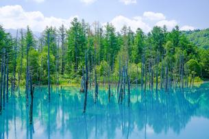 青い池の写真素材 [FYI04579680]