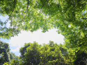 空と新緑の写真素材 [FYI04579824]