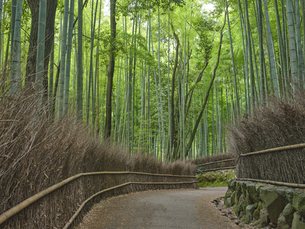 嵯峨野の竹林の写真素材 [FYI04579839]