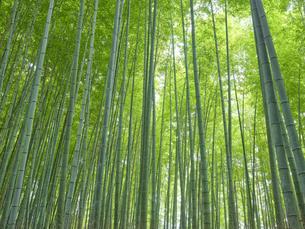 嵯峨野の竹林の写真素材 [FYI04579842]