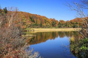 秋の八幡平 大沼の紅葉の写真素材 [FYI04580168]