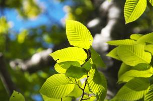 新緑の写真素材 [FYI04580227]