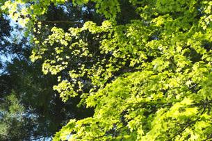 新緑の写真素材 [FYI04580253]