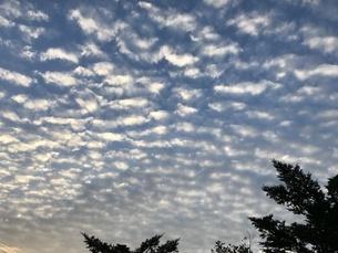 高原の夕暮れの空、夕日に照らされて、光る高積雲の写真素材 [FYI04581128]