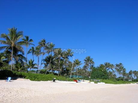 ラニカイビーチ、海岸のヤシの木、ハワイ州オアフ島、天国の海の写真素材 [FYI04581176]