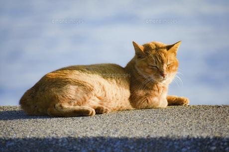 日の光をあびるネコの写真素材 [FYI04581450]