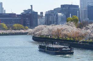 中之島ビル群と桜の写真素材 [FYI04581650]