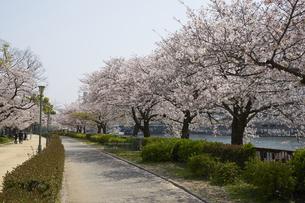 南天満公園の写真素材 [FYI04581689]