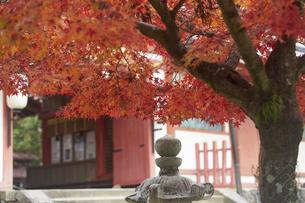 奈良公園のモミジの写真素材 [FYI04581830]