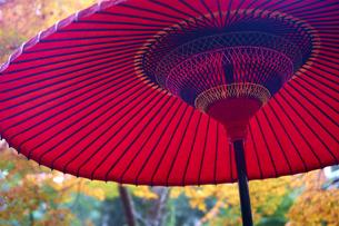 奈良公園のモミジの写真素材 [FYI04581838]